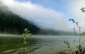 UPLAND FRESHWATER SWAMP DISCOVERED FROM RANGAMATI, BANGLADESH