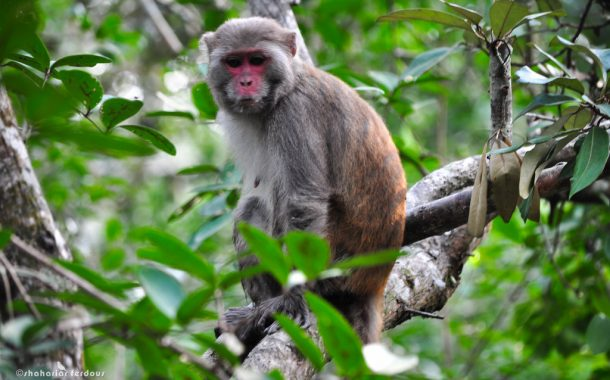 Story of Sundarbans: Monkey and Crocodiles of Jaamtoli