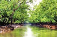 Telecommunications to be revived in Sundarbans